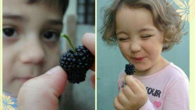 Açúcar não é comida de criança!