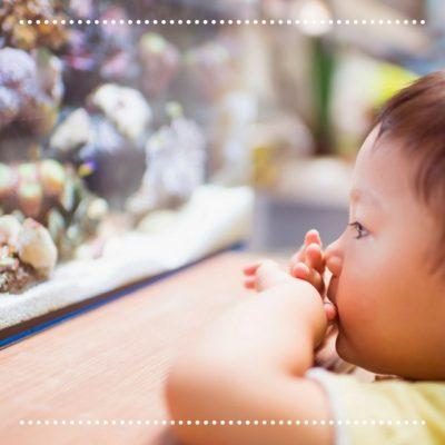 4 formas de nutrir a curiosidade em uma criança com autismo